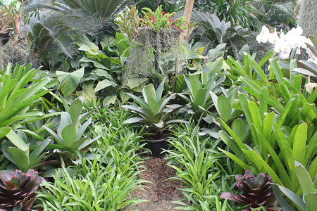 animal vein: Ornamental gardens green