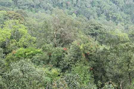 extreme terrain: Tree tops of forest in Thailand. Stock Photo