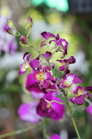 flower close up: orchid flower,close up Stock Photo