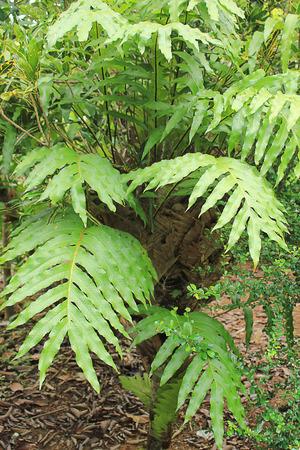 ferns: Ferns, greenery