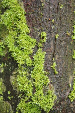 ferns: Moss, ferns on tree