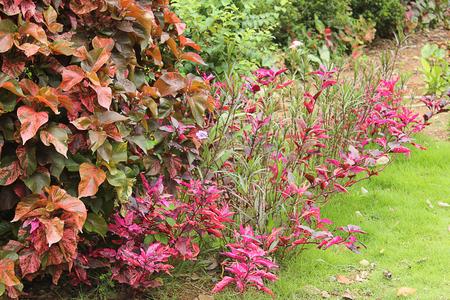 garden lawn: Plant  in the garden