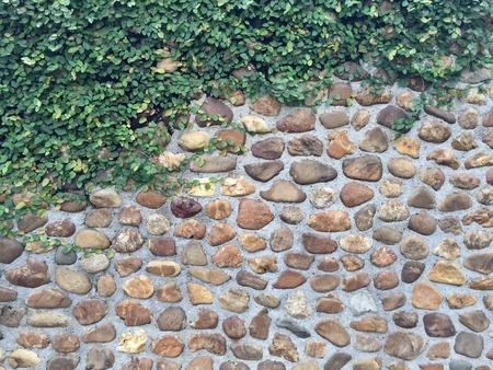Ivy leaf on stone wall background