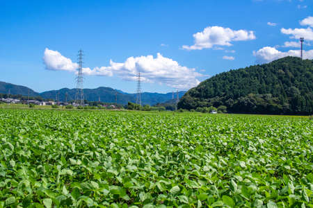 Fields and mountains in Maibara City, Shiga Prefecture