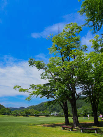 A sunny Japanese park with lots of greenery