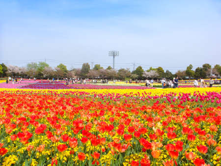 Beautifully blooming flowers such as tulips in Long Island City, Mie Prefecture