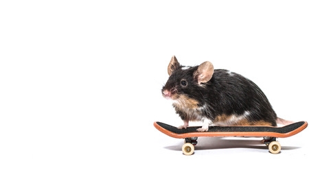 Black and white mouse with skateboard