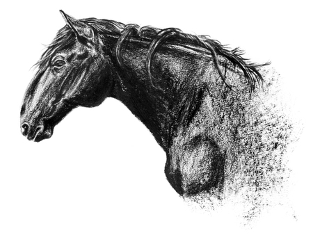 Equus bohemicus, the kladruber drawing, charcoal portrait isolated on white, hand drawn