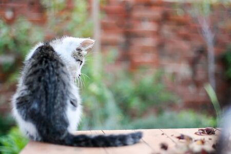 Little black and white tabby kitten sitting outdoor with space on the right