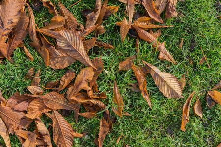 Half photo of autumn leaf from left corner and half fresh green grass, background Imagens
