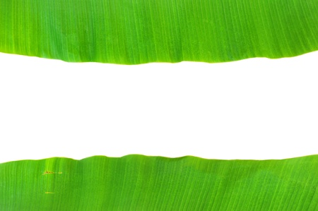 banana leaf background Stock Photo - 9648167