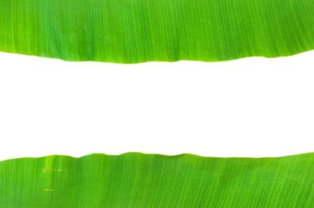 banana leaf background Stock Photo - 9648167