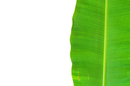 banana leaf background Stock Photo - 9648161