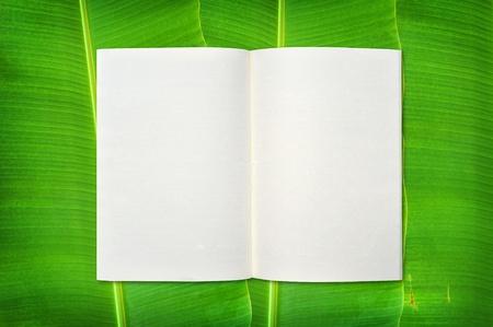 banana leaf: Bloc de notas en el fondo de hoja de pl�tano Foto de archivo