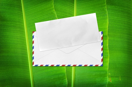 Envelope with blank paper on banana leaf background photo