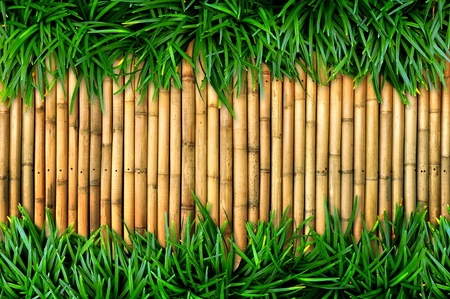 wallpaper vibrant: green grass on bamboo background Stock Photo