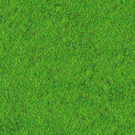 blades of grass: green grass field background