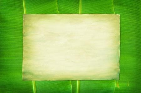 green Vintage paper on banana leaf background photo