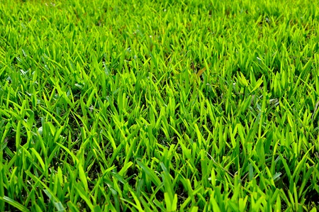 green grass field background Stock Photo - 9648068
