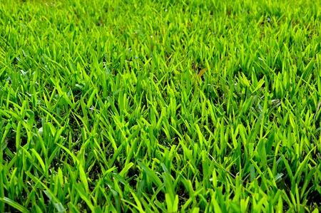 green grass field background Stock Photo - 9648068