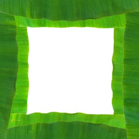 isolated banana leaf on white Stock Photo - 9702408