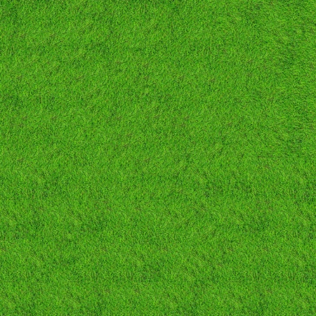 grass field: green grass field background