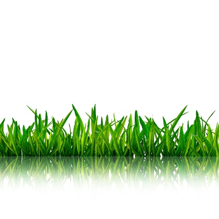 Isolated green grass with reflection on white background Stock Photo - 9702387