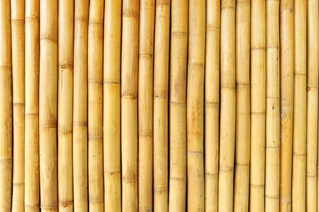 bambu: Fondo de pared de bamb�