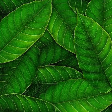 fresh Green leaves background,