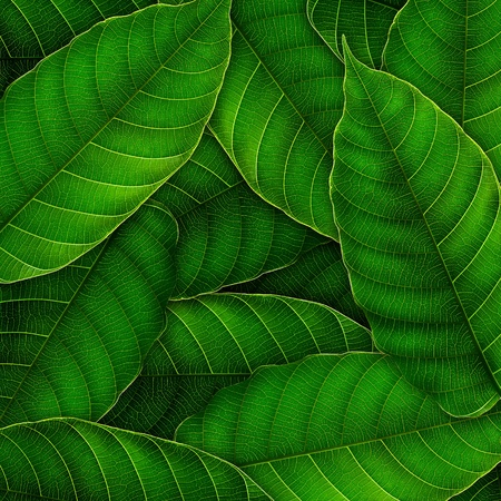 leaf close up: fresh Green leaves background,