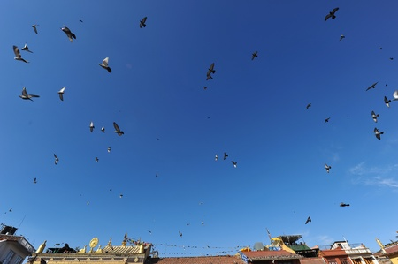 Traditionali house and Pigeon  in Kathmandu,nepal photo