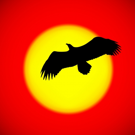 eagle flying: Silhouette of an eagle flying in front of the setting sun