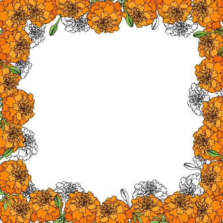 Tagetes or Marigold flower frame vector illustration