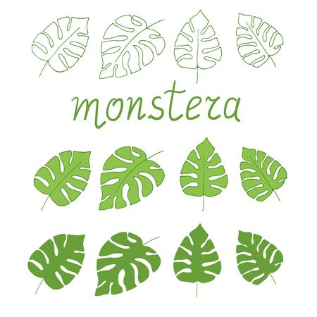 Tropical monstera deliciosa leaves. Hand drawn exotic vector illustration. Illustration