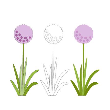 Flowering onion with green leaves, purple garden flowers