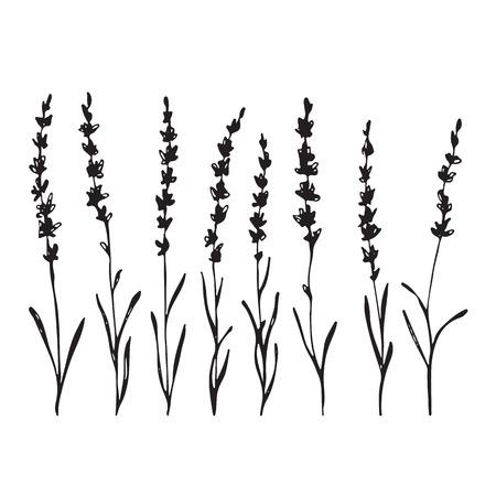 Set of hand drawn lavander flowers, monochrome silhouette Illustration