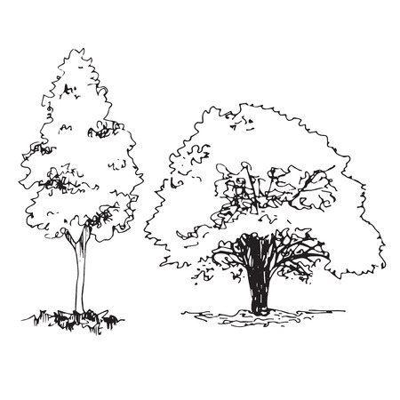 Set of hand drawn architect trees, tree silhouette, dendrology sketch collection, graphic template.