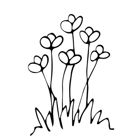 Sketch flower bed, floral composition, free hand drawing