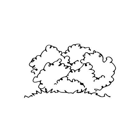 Hand drawn architect shrub. Vector sketch. Architectural illustration Archivio Fotografico - 105706838