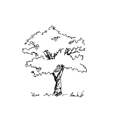 Hand drawn architect tree. Vector sketch. Architectural illustration Vettoriali