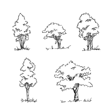Set of hand drawn architect trees. Vector sketch. Architectural illustration
