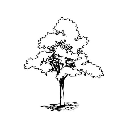 Hand drawn architect tree. Vector sketch. Architectural illustration Illustration