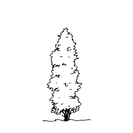 Hand drawn sketch thuja. Architect tree. Isolated shrubbery on transparent background Ilustrace