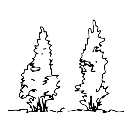Set of hand drawn sketch thujas. Architect trees. Isolated shrubbery on transparent background Illustration