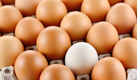egg white: egg in carton box Stock Photo