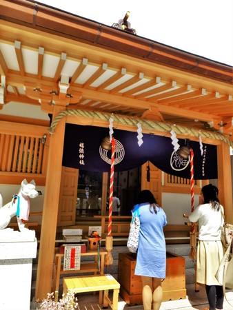 rafters: Japan bridge shrine