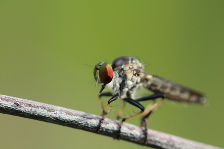 objected: dragon fly