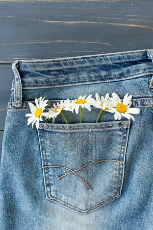 camomile in jeans pocket. studio macro shot