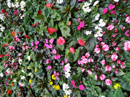 flower bed with flowers of different colors. Urban landings. Landscape.