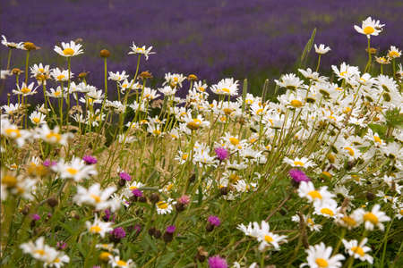 Flower meadow in sunny hot summer